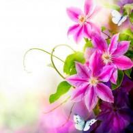 Розовые цветы белые бабочки