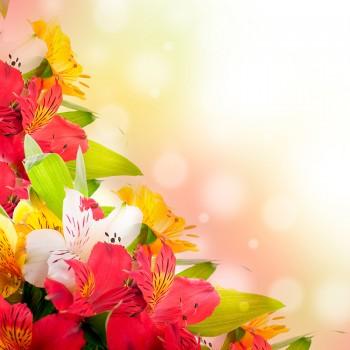 Яркие лилии