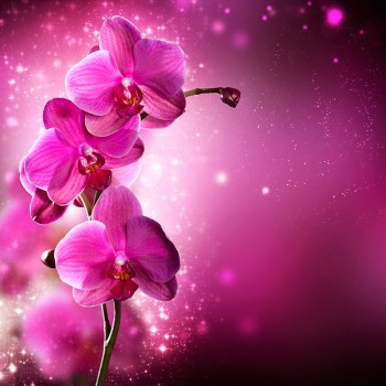 Королевская орхидея