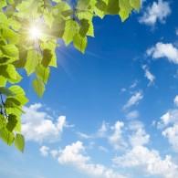 Небо, облака, листва