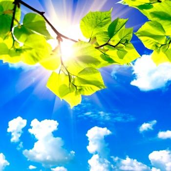 Облака и листья
