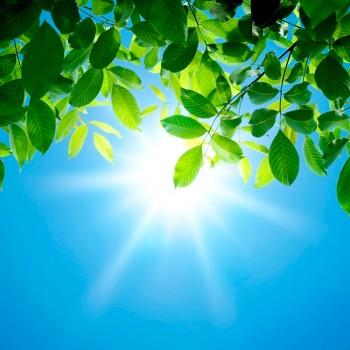 Яркое Солнце, листья