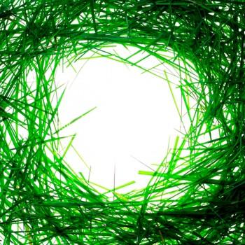 Рамка зеленой травы