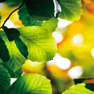 Лето, листья макро
