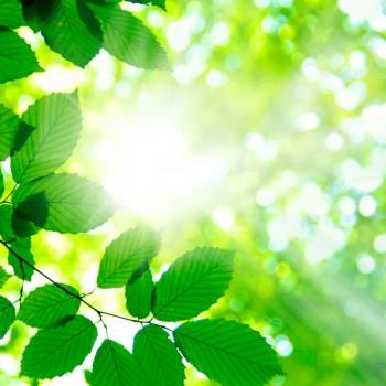 Лучи сквози листву