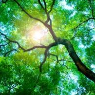 Солнечная роща