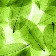 Текстура листьев макро