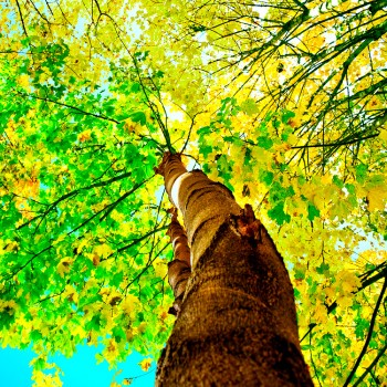 Дерево, желтый, зеленый